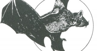 A little brown bat flies across the moon. Author's drawing