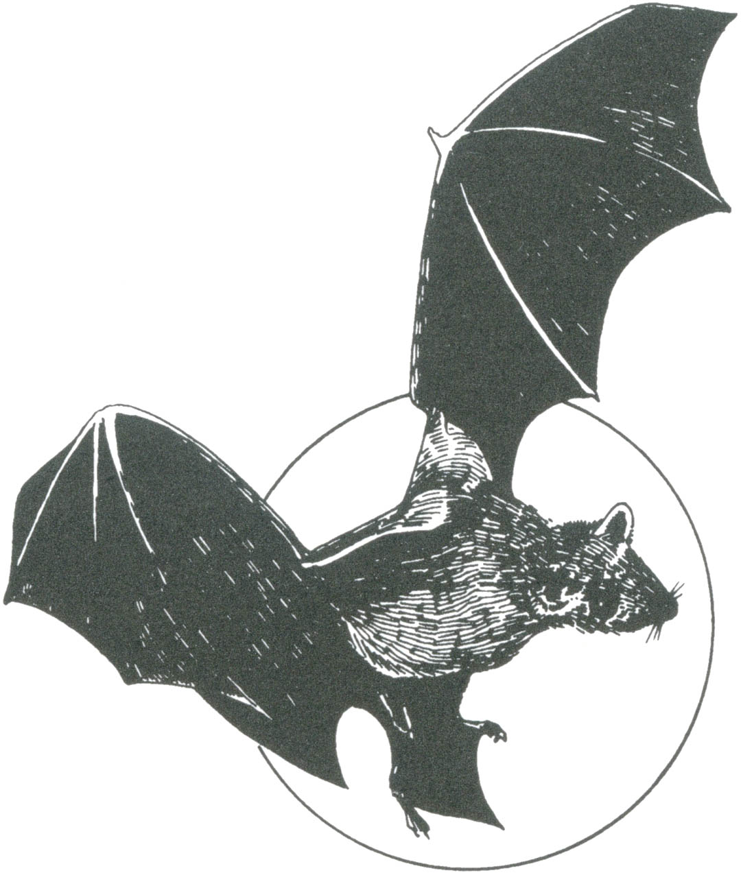 pacific horticulture society bats