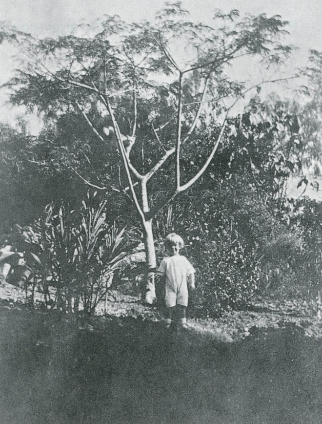 Warren E Fenzi, Franceschi's grandson, pictured four years after Franceschi returned to Italy. Ten acres of Montarioso were covered with exotic plants.