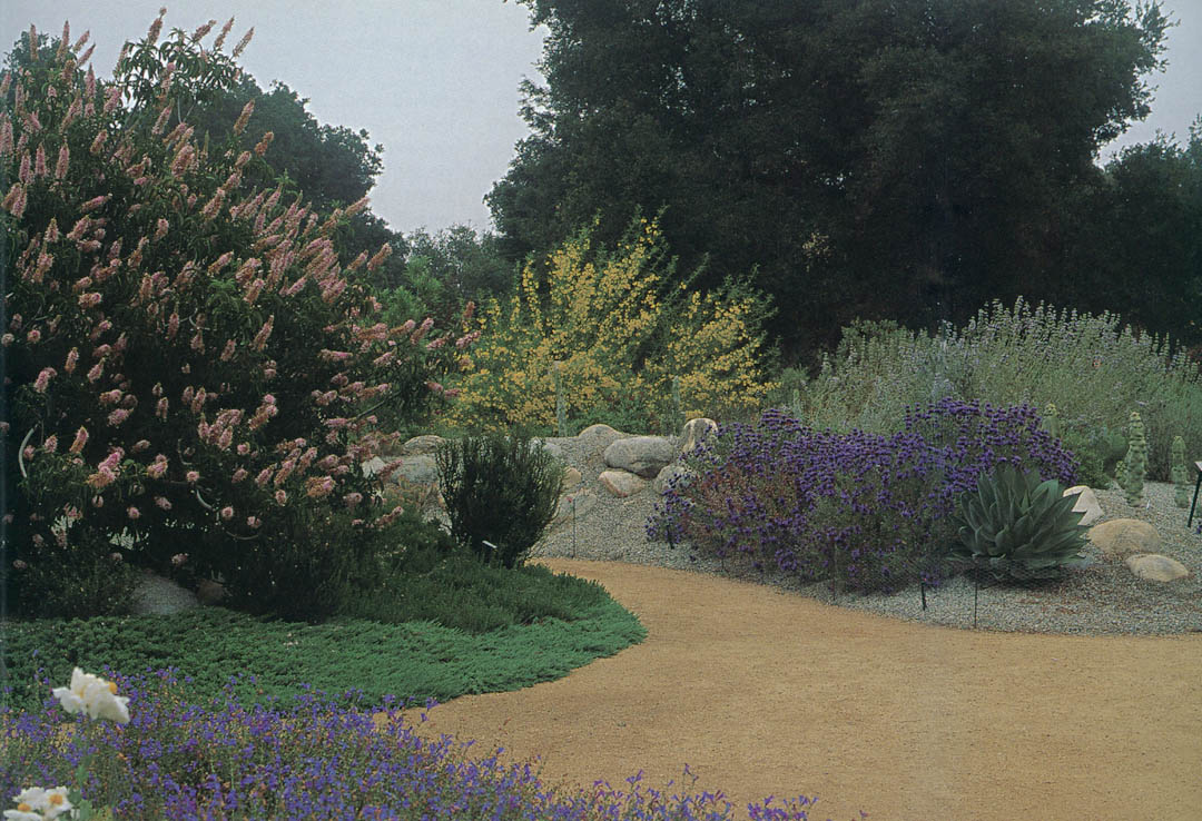 The Cultivar Garden, With A Pink Selection Of California Buckeye (Aesculus  Californica U0027Canyon