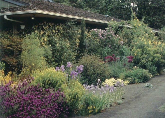 The driveway beds stretch along the south side of the author's house and receive reflected light (and heat) off the pavement and the house. Thriving here are Iris pallida, Lavandula stoechas and L. viridis, alliums, euphorbias, and lupines. Author's photographs, except as noted