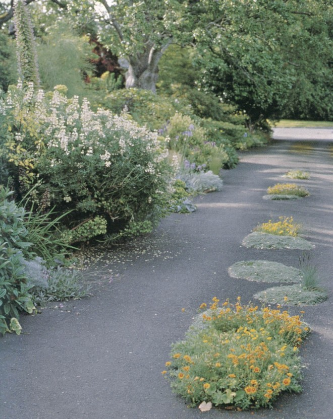 With the success of the earlier beds, more of the asphalt was removed to create new areas for plantings of sunrose (Helianthemum) and silvery thymes (Thymus spp.) that can easily be driven over