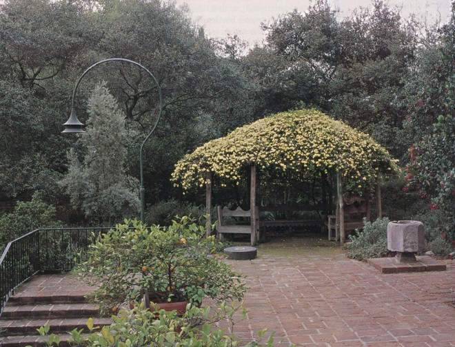 Yellow Lady Banks rose (Rosa banksiae 'Lutea') covers the wooden Doerr Arbor, named for Harriet Doerr, author; former resident, and donor of the eighteenth-century stone font on the right