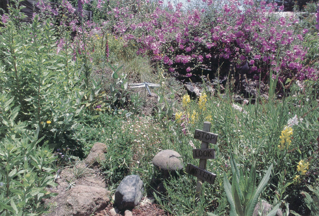 The Meadow Pond Nearly Disappears With The Abundant Growth Of Mallows And  Other Plants Of Value