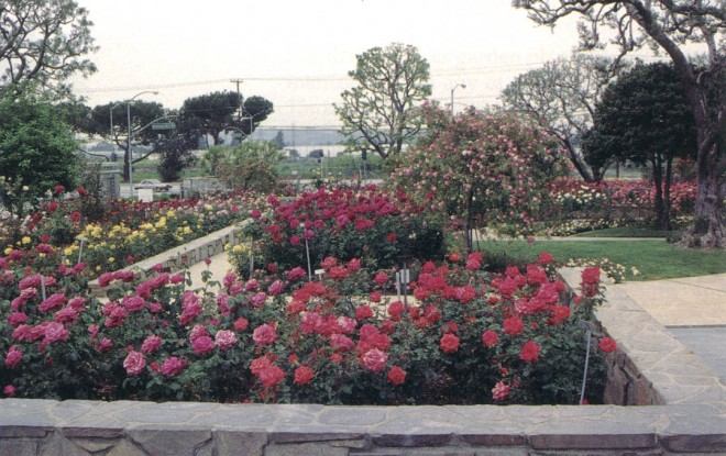 What sets Rose Hills Memorial Park apart from many public rose gardens is the emphasis on mass plantings of each selection to create expansive sweeps of rich color