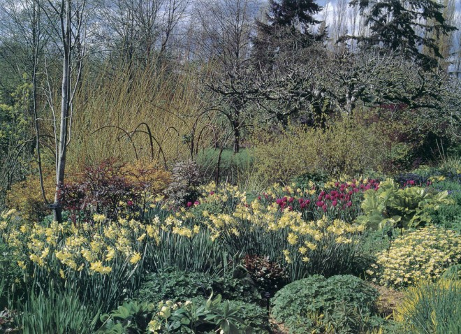 In spring, the strong form of one of the original apple trees and the brightly colored stems of Salix alba subsp. vitellina provide a backdrop for drifts of Narcissus (Poeticus) 'Pipit', mounds of Ranunculus ficaria, and the emerging maroon shoots of herbaceous peonies; the arching rebar supports will hold roses above the plantings in summer. Photographs by Lynne Harrison