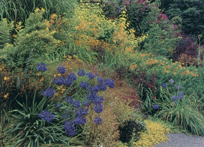 Midsummer in the Yellow, Black, And Blue section, with Agapanthus 'Bressingham Blue' below the gold and green foliage of Forsythia 'Fiesta' and backed by yellow Crocosmia 'Jenny Bloom', daisies, and daylilies (Hemerocallis 'Autumn Minaret' and 'Golden Chimes')