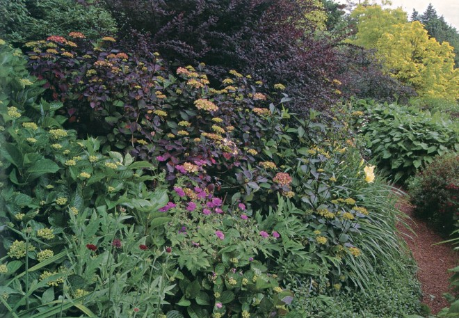 The Double Path in summer with various hydrangeas, Berberis thunbergii 'Atropurpurea', daylily foliage, Persicaria amplexicaule 'Firetail',  and the golden foliage of Catalpa bignonioides 'Aurea' in the distance