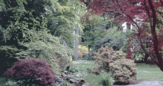 A stone path leads through a shady corner of the garden, with brightly colored deciduous azaleas in the distance
