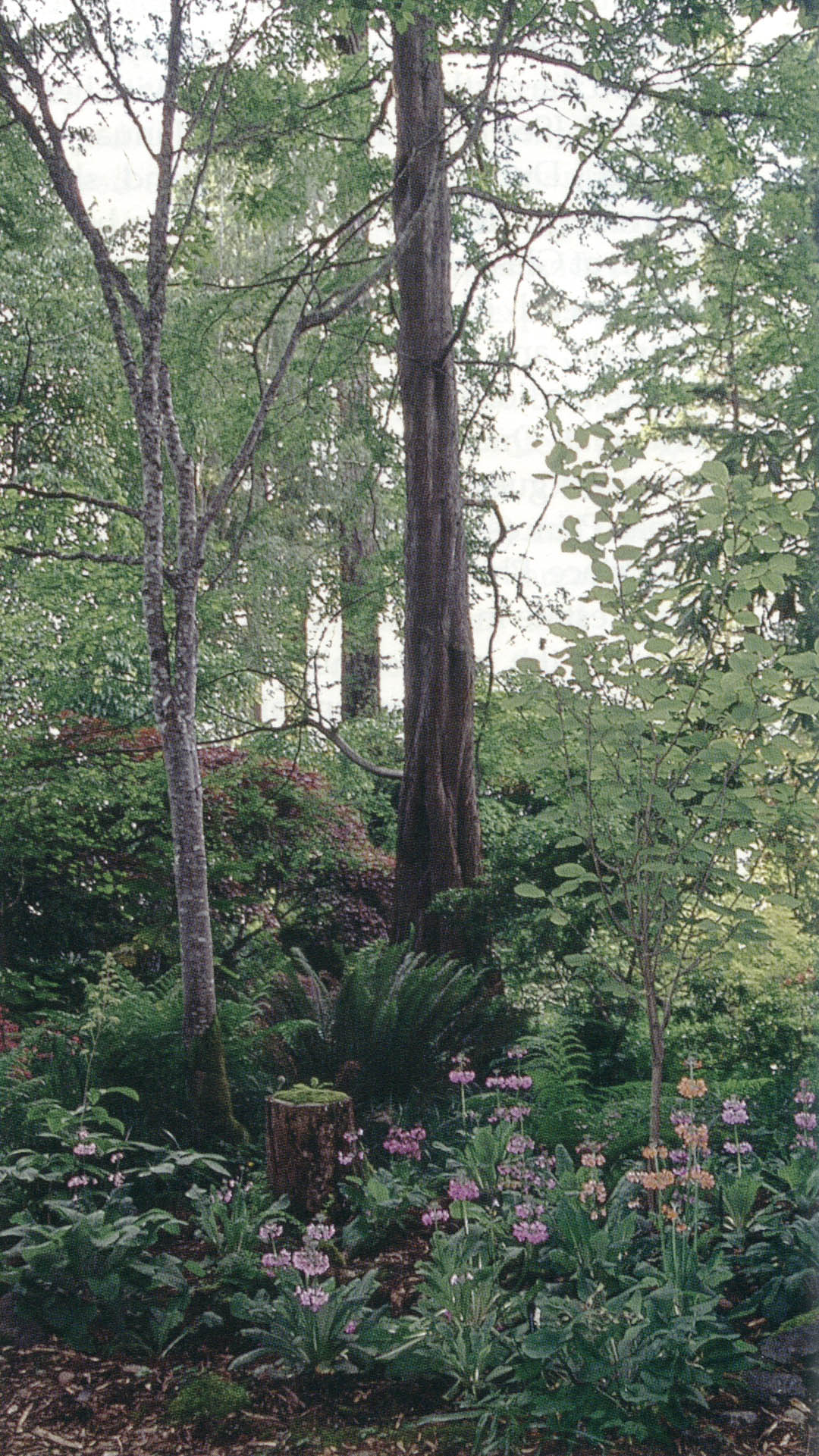 Pacific Horticulture Society | Open for Viewing… Vancouver Island ...