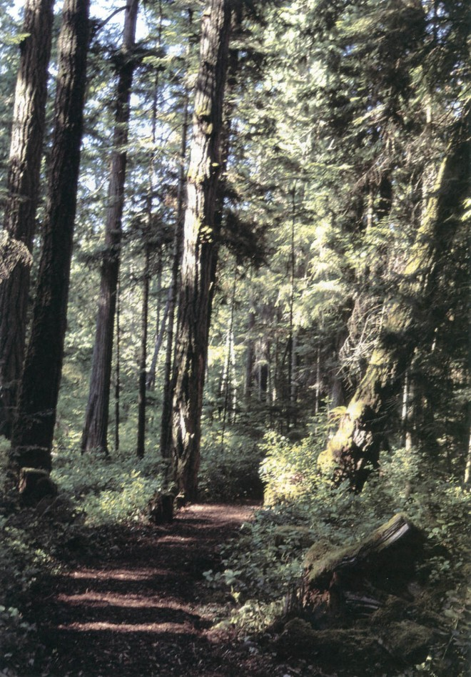 The forest trail at Milner Gardens and Woodland