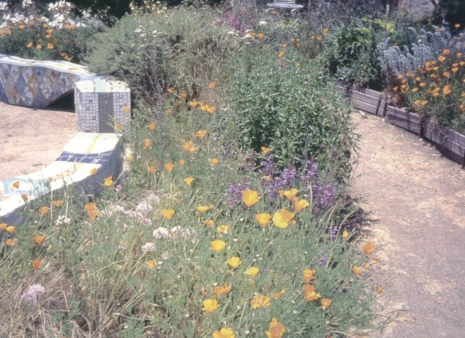 "One of the best ""bee gardens"" is the Peralta Community Garden in the flatlands of west Berkeley, filled with a variety of herbaceous plants and woody shrubs offering bee attractive flowers almost year-round; an unusually high number of bees were attracted to the long-flowering California poppies (Eschscholzia californica) in this garden. Photographs by Dr Gordon Frankie, except as noted"