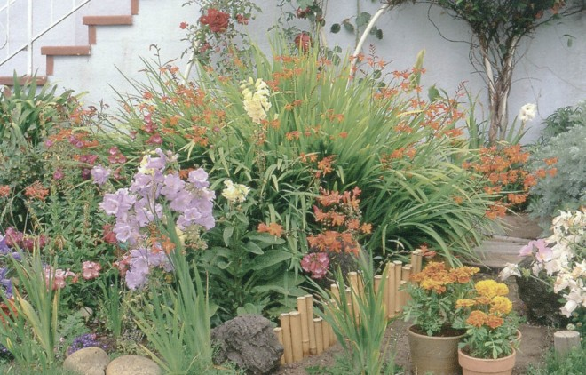 A cottage garden dominated by a clump of Crocosmia x crocosmiiflora