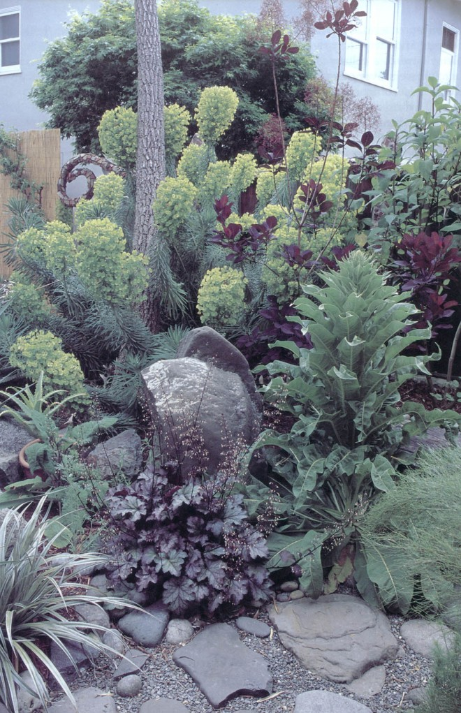 The emerging foliage of a purple smoke tree (Cotinus coggygria 'Purpureus'0 contrast with the fading chartreuse inflorescences of Euphorbia characias 'Lambrook Gold'. In the foreground, Purple and silver foliage of Heuchera 'Amethyst Myst' and an Astelia play off the grays of boulders, flat stones, and gravel. To the right, a mullein (Verbascum) will eventually dominate the scene with its tall spike of flowers