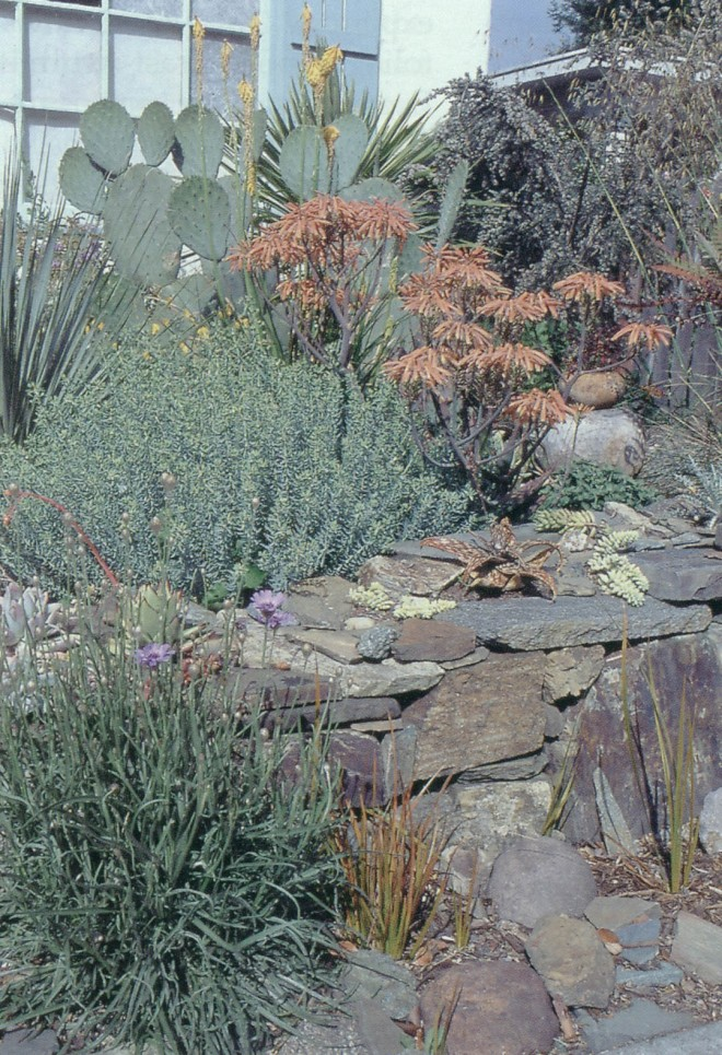 The stone wall and mulch in the front garden set the tone for this dry composition of succulent, coral-flowered aloes, blue gray euphorbias, and orange-striped leaves of Libertia perigrinans; a selection of sedums and other succulents fill the crevices.