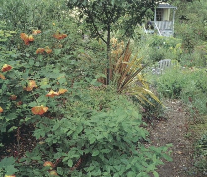 Phil Van Soelen's front garden, designed from the porch, with Phormium 'Maori Sunrise' echoing the colors of Abutilon 'Victor Reiter' and Spiraea 'Limemound'; textured foliage of Cornus sessilis fills the lower foreground. Photographs by Rosalie and Marcus Wardell
