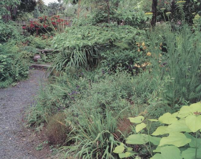 he golden foliage of Catalpa bignoniodes 'Aurea' brightens a corner of the garden, beneath the tall floral heads of a golden yarrow (Achillea filipendulina)