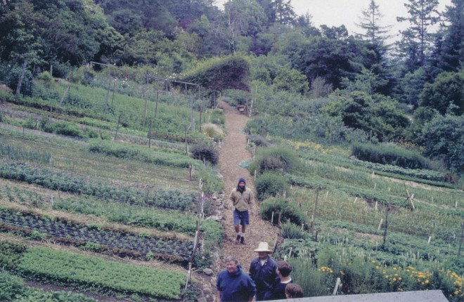 A late spring overview of the Alan Chadwick Garden's double-dug vegetable beds, set on a slope with a southern exposure. Photographs by Don Burgett