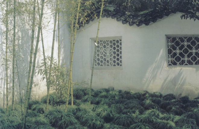 Topped by an elaborate tile roof and pierced by windows allowing views into the garden from the passageway beyond, white stuccoed walls surround most gardens and allow for the play of shadows and silhouettes of plants such as these carefully thinned bamboos