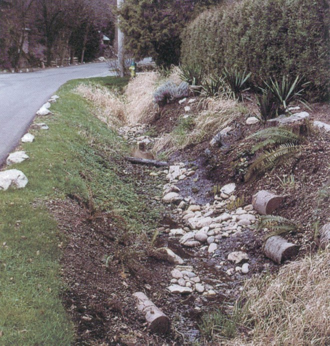 Before: work in progress on Ditch Three in April 2001, with plenty of reed canary grass (Phalaris arundinacea) still to be removed. The neighbor's cypress hedge screens the ditch from their view. Occasional boulders edging the street help guide drivers at night. Author's photographs