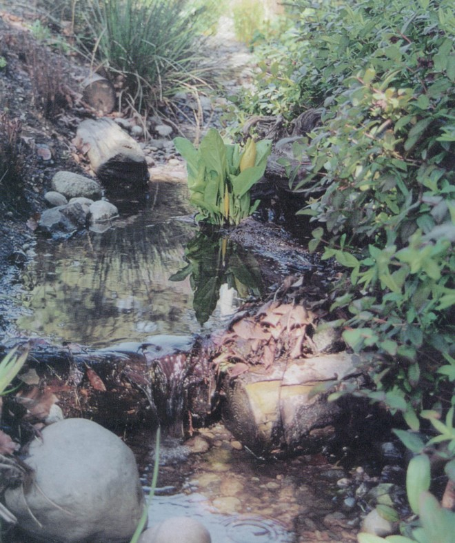 "Rocks and logs arranged to force the water to ""pool and drop,"" which creates the perfect setting for skunk cabbage (Lysichiton americanum), flowering near top center, and also allows sediments to settle out of the runoff water rather than harm downstream fish habitat"