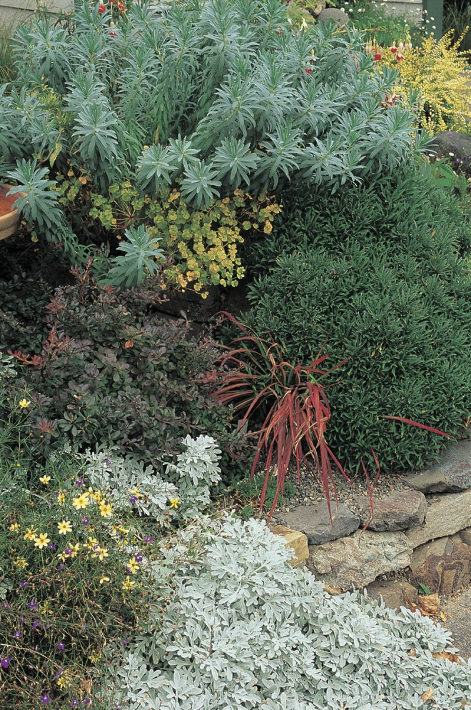 If you have a lot of weeds in your beds and borders, you don't have enough plants. Interlayer shrubs and perennials as they are in nature, so plants barely overlap, with enough room to achieve their natural size and shape. Photograph by Janet Loughrey