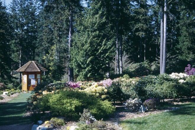 A portion of the Meerkerk Hybrid Test Garden, carved from the native Douglas-fir woodland. Photograph courtesy Meerkerk Rhodododendron Gardens