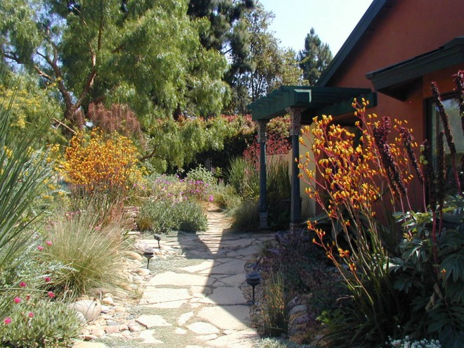 The berm shelters a comfortable gravel garden at the entry, with pathways of broken concrete and clumps of colorful hybrid kangaroo paws (Anigozanthos)