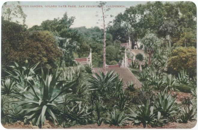 Postmarked in 1909, this historic postcard view of the Golden Gate Park Arizona Garden features the Victorian stairs. Photograph courtesy San Francisco Recreation and Parks Department