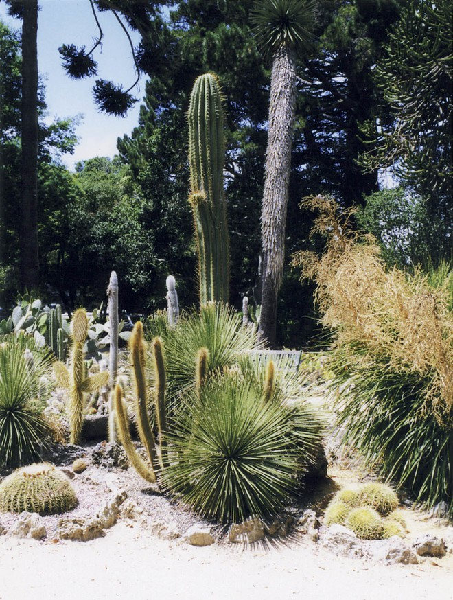 Restored Arizona Garden at the Naval Post Graduate School (formerly the Hotel del Monte) in Monterey. Author's photograph