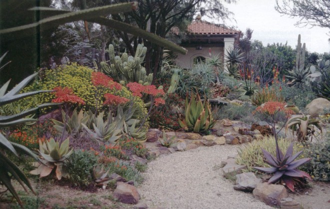 The desert garden with a view to the pavilion; Aloe striata flowers to the left of the path