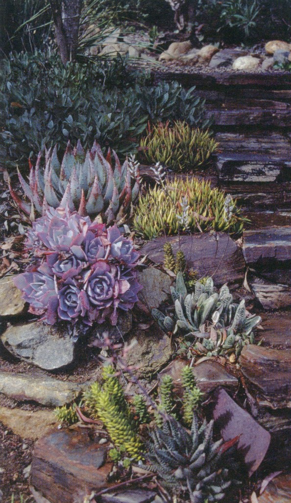 Selections of Echeveria, Aloe, and Gasteria edge a flight of stone steps leading into the desert garden