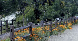 Residents of Elfin Forest sowed more than sixty pounds of wildflower seeds to win points in the Floral Displays category. Author's photographs