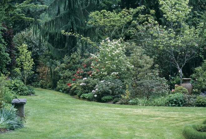 A thoughtfully planted border along the south edge of Anne Holt's garden. The dense hedgerow features plants in every shade of green, growing in forms tall and short, leafy and needled, mounded and weeping. The voluptuous urn, placed off-center, balances the lawn's curve at left.