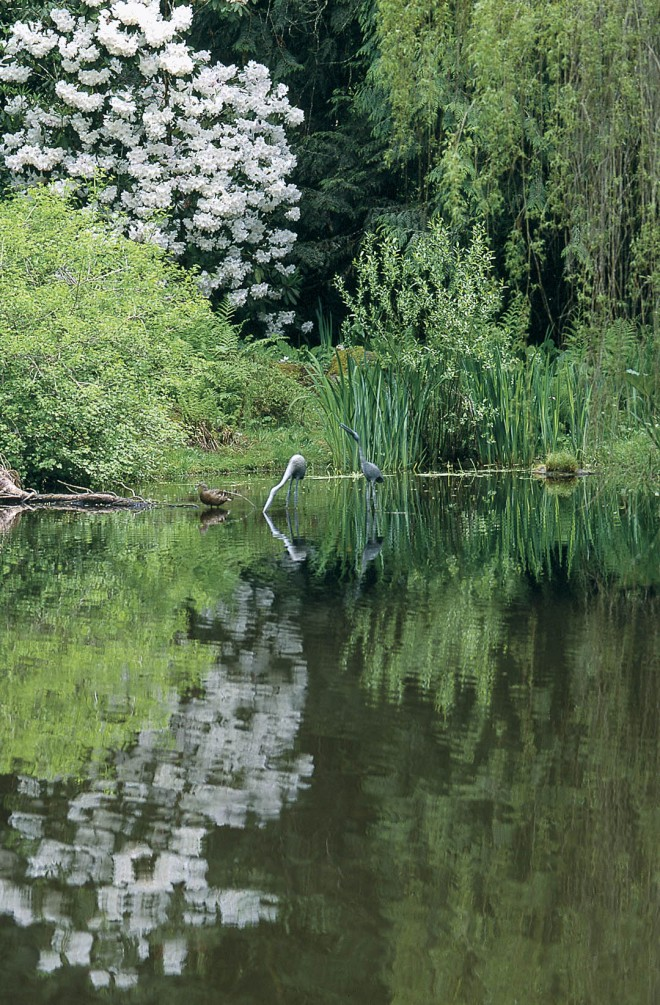 A pair of lifelike cranes seen mirrored in the pond adds a natural touch to the woodland setting where a weeping sequoia has fallen into the water; thriving as a tree beyond the pond is Rhododendron 'Loderi King George', a fragrant, white selection well-situated for the partially shaded site.