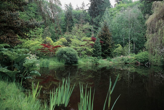 Anne appropriated a boggy area of her land for a woodland pond and water garden, encouraging moisture-loving plants to thrive along the water's edge. She planted conifers, birches, and red- and green-leafed Japanese maples (Acer palmatum) to create a visual treat in the distance.
