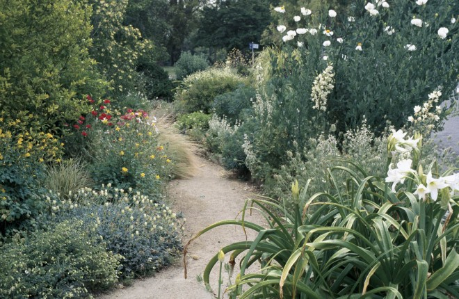 Ornamental oregano (Origanum libanoticum), Gazania 'Talent', golden columbine (Aquilegia chrysantha), and Matilija poppy (Romneya coulteri) flank one of the gently curving paths; large white flowers of Crinum moorei mark the lower right corner. Photographs by Daisy Mah, except as noted