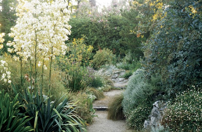 White flowers of Yucca filamentosa dominate a pathway edged in granite walls partially hidden behind cascading masses of Erigeron karvinskianus