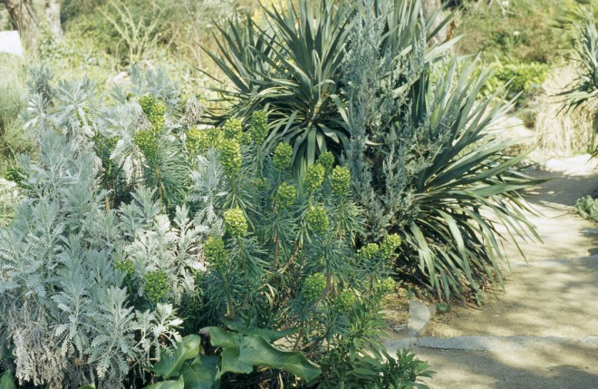 Artemisia, Euphorbia, and Yucca are stalwarts of the WPA Rock Garden. Photographs by Daisy Mah, except as noted