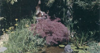 The author's pond at the bottom of his garden. Author's photograph