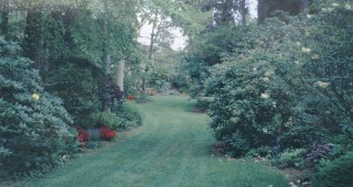 View through the glen flanked by EB Dunn's woodland garden, 1996. Photographs courtesy of the Dunn Garden Archives