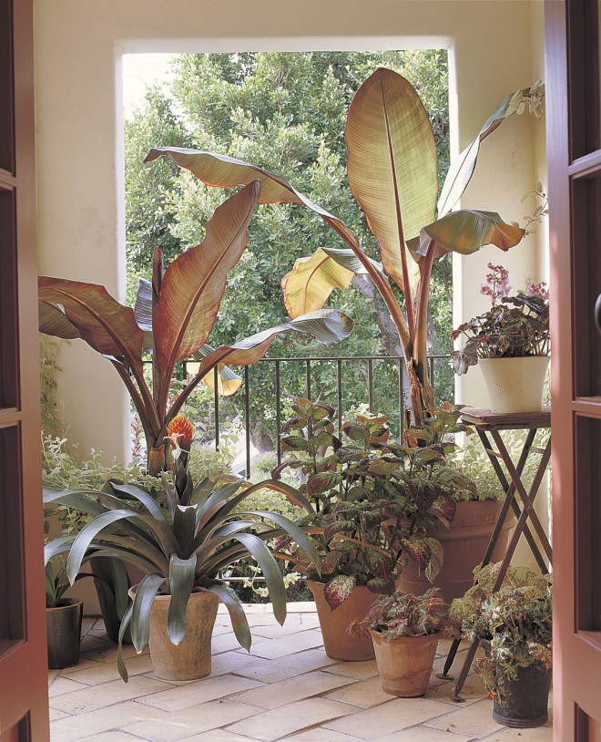 Potted plants throughout the garden provide color and seasonal changes