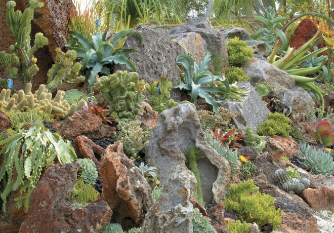 Languid sea-weed-like Epiphyllum drape over the rock at left; starfish-like Dyckia and Agave highlight the middle; and crested forms of Euphorbia mimic coral formations