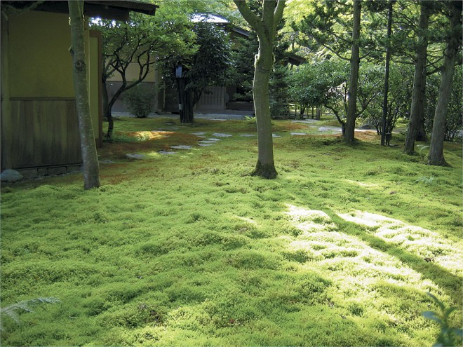 Soft, silent moss suggests serenity