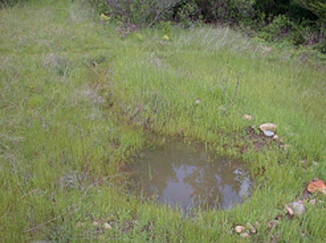 A contour swale, or infiltration ditch, with an ephemeral pool at one end. Located in a wildland setting at the Occidental Arts and Ecology Center, it was installed to intercept excess stormwater, allow it to soak into the slope, and reduce gully erosion.