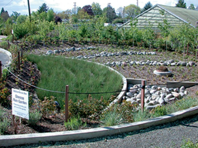 At Portland's Glencoe Elementary School, the Raingarden collects parking lot stormwater into a bed filled with sedges (Carex spp.) to biofilter the pollutants; from there, the water passes through a series of stepped terraces that slow the movement and allow it to infiltrate the soil.