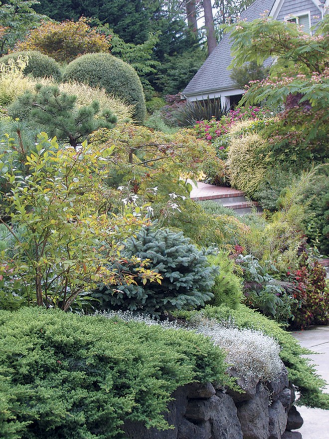 View from the parking area up the steps to the front path. Junipers, spruces, pines, and other conifers provide structure, against which an abundance of flowers, in the ground and in containers, stand out in summer.