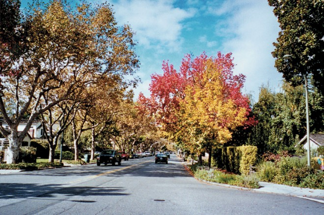 Middlefield Road, a typical tree-lined street in Palo Alto, with front gardens reaching the street
