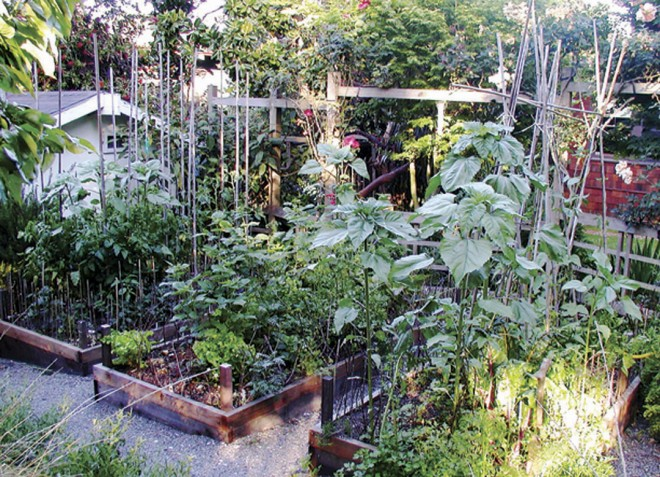 Vegetables thrive in their sunny raised beds, backed by the open, goodneighbor fence