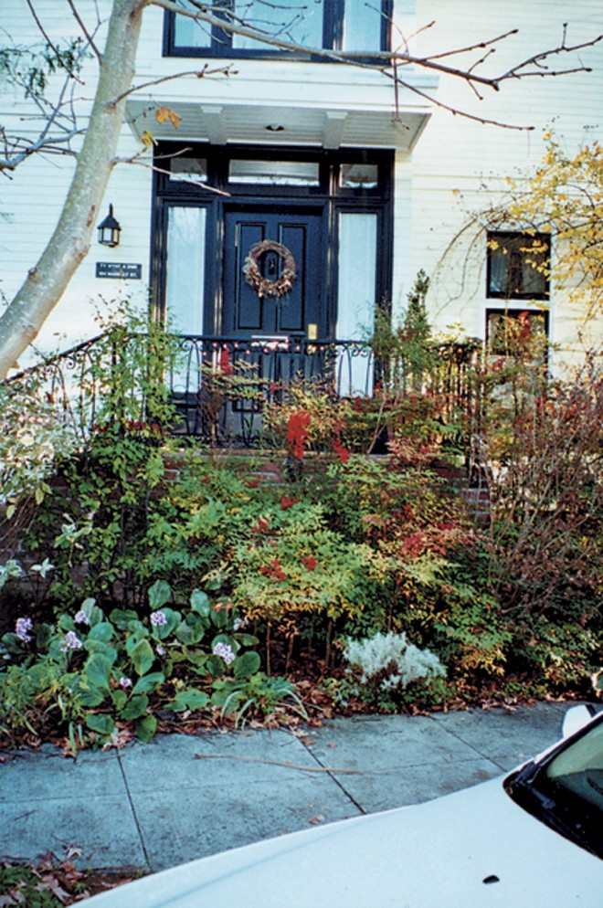 A portion of the Craig's front garden in winter